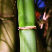 #4406 Bambus-Baum