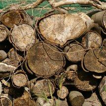 #0603 Holz lagern