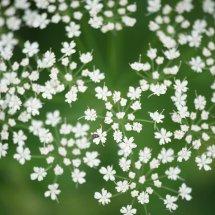 #0012 Marko weiße Blüte