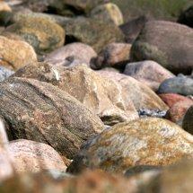 #2821 Steine am Strand