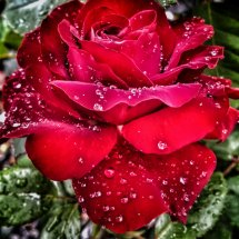 #0229 Lübecker Rotspon nach dem Regen