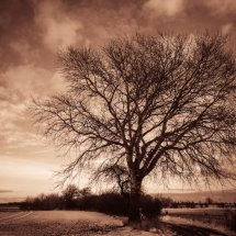 #0079 Baum sepia