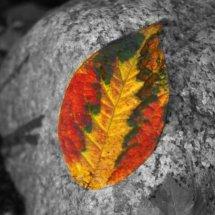 #0044 Herbstlaub