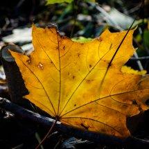 #0009 Herbstlaub