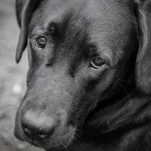 #2455 schwarz-weiß Portrait Billie