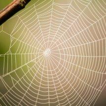 #0019 Spinnennetz