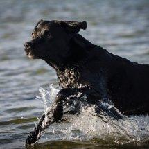 #2846 Splash -Juno in ihrem Element