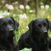 #2432 Billie und Juno