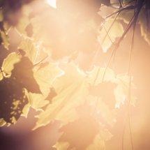 #0075 shining autumn - leuchtender Herbst