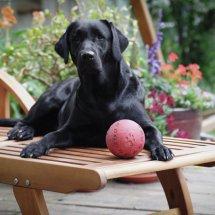 #2442 Mein Haus, mein Ball, meine Liege....!!!!