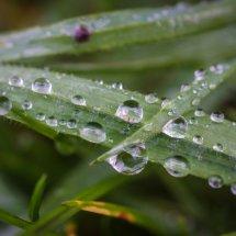 #0016 Wassertropfen auf Gras