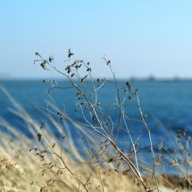 #2826 Dünengras mit blauem Meer im Hintergrund