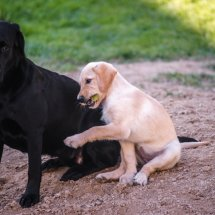 #2242 best friends - Billie&Samba
