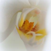 #0057 Orchidee weiß Makro