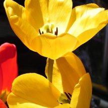 #0048 der Frühling erwacht