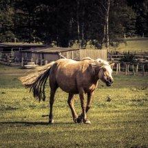 #1413 Pferd retro