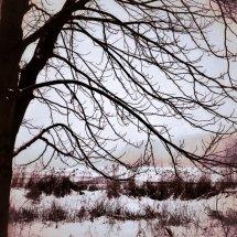 #0080 Baum im Winter