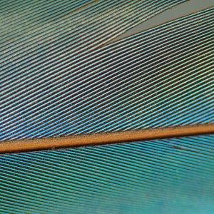 #4001 Makroaufnahme Arafeder