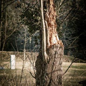 #0606 abgebrochener Baum