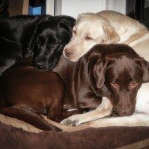 #2426 Eingeschneckt - 1 Hundekorb reicht locker