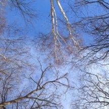 #0610 ein Blick nach oben lohnt sich manchmal...