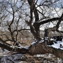 #0611 Baum am Boden lebend