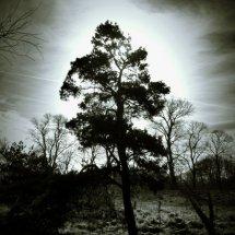 #0612 mystischer Baum