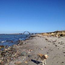 #2835 Himmelblau mit Hund
