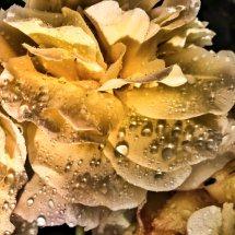 #0215 Bernstein Rose mit Regentropfen
