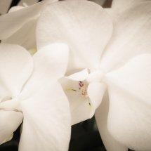 #0077 Orchidee weiß