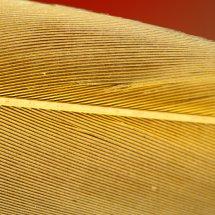 #4020 Arafeder gelbe Seite
