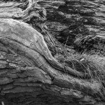 #0614 Baumstruktur schwarz-weiß