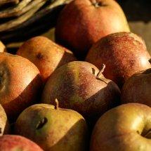 #0021 Boskoop Äpfel