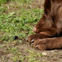 #2010 schwarzer Maiwurm